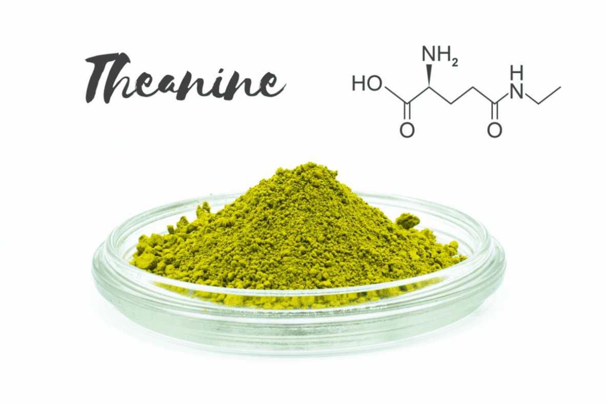 Can L-Theanine Make You Feel More Alert and Relaxed at the Same Time?